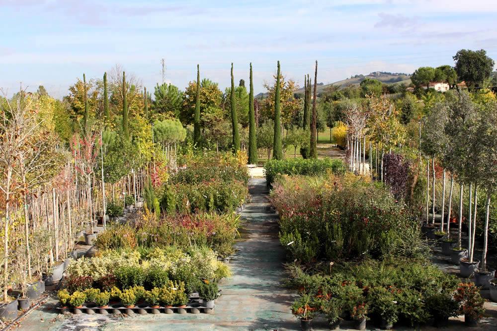 Esposizione piante e fiori vivai conti for Vendita piante esotiche